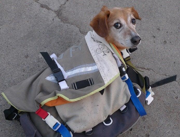 メッセンジャーバッグの防水ものに入る犬