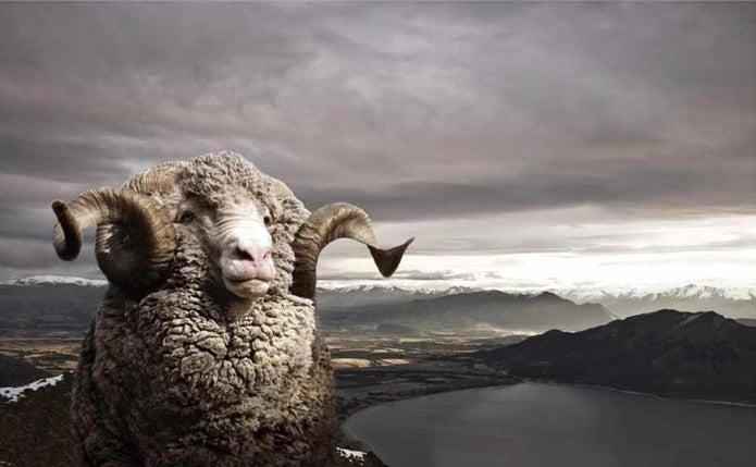 アイスブレーカーに使われる羊の毛