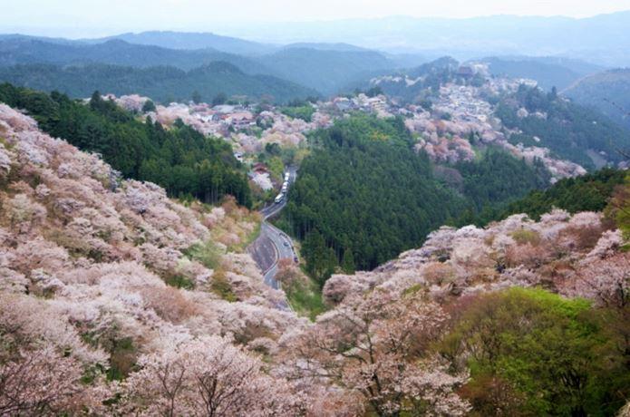関西でハイキングが楽しめる吉野山