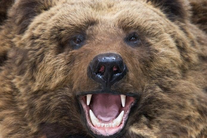 熊スプレーを使われる熊