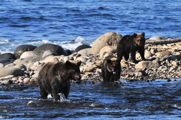 熊スプレーを恐れる熊