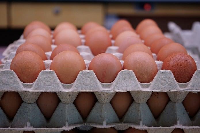 紙の卵ケースに並べられた卵