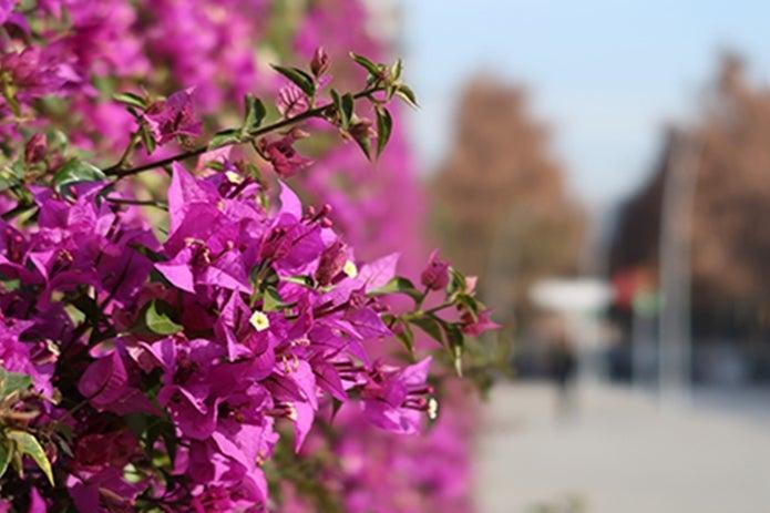 コンパクトなデジカメで撮影した花