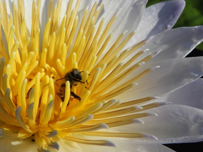 コンパクトなデジカメで撮影したハチ