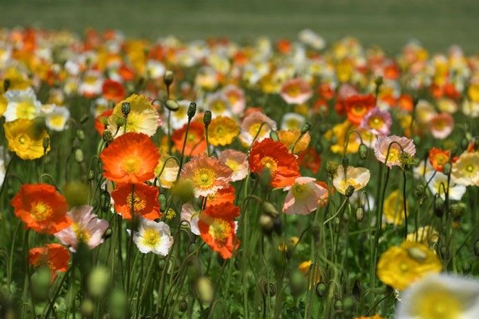 望遠レンズで撮った花