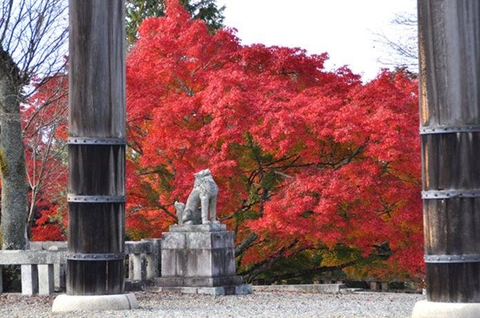 秋の吉野山の紅葉