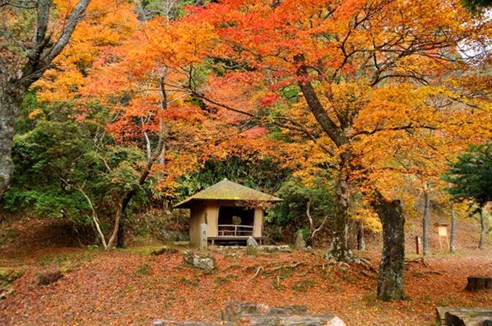 秋の吉野山の紅葉②