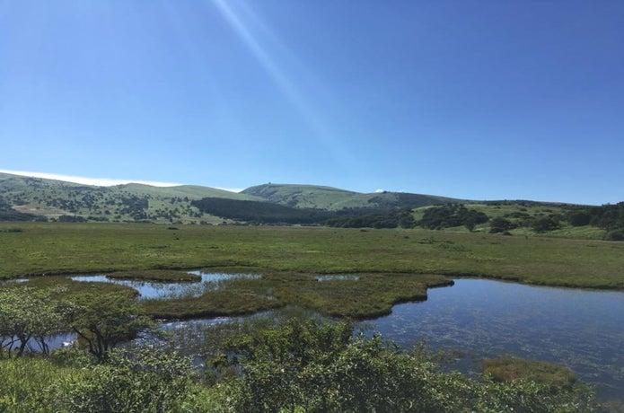 霧ヶ峰の八島ヶ原湿原の画像