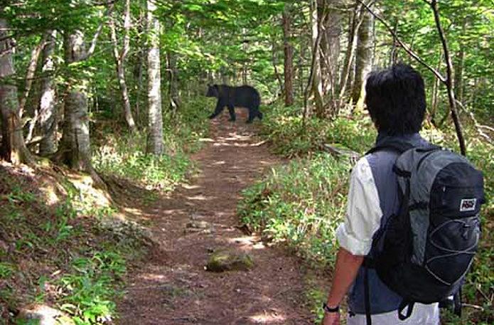 山中で熊に出くわす