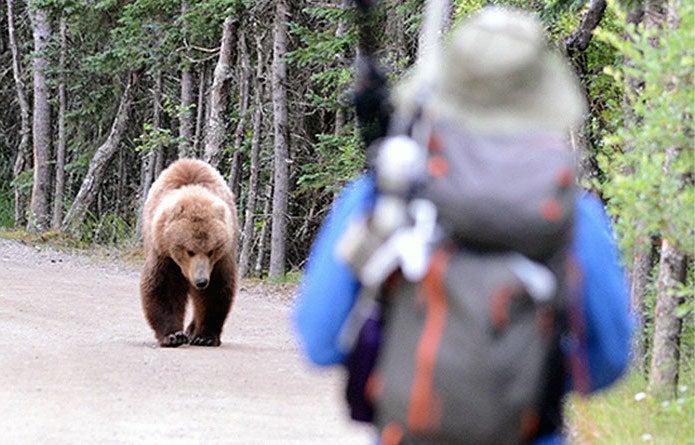 熊と対峙してしまった写真
