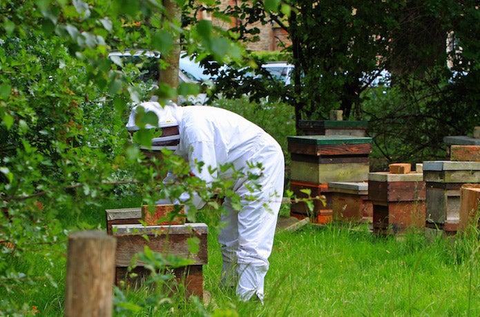 養蜂場と養蜂家の写真