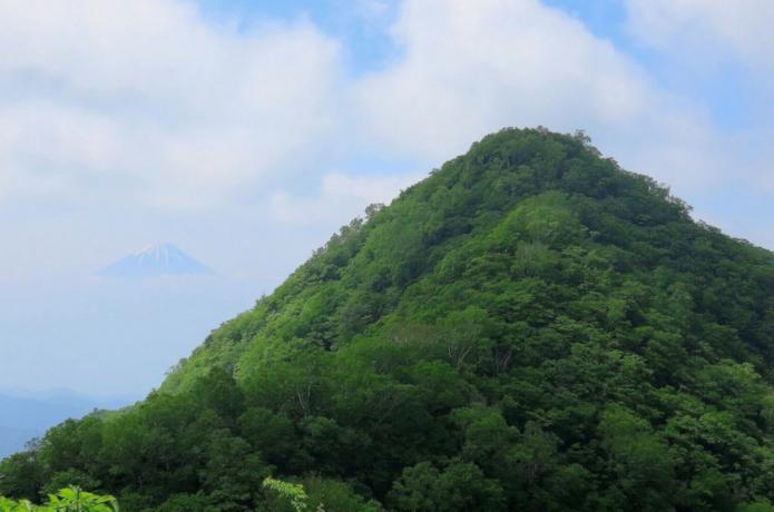 茅ヶ岳と富士山の画像