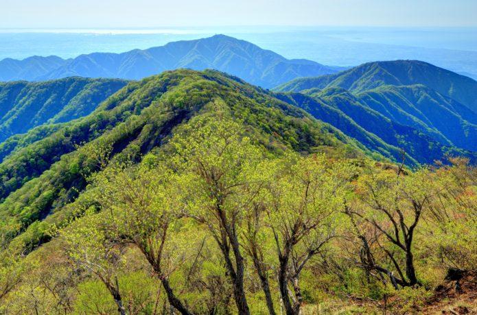 丹沢大山の画像