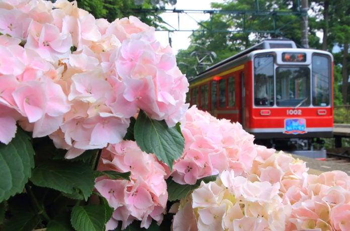 宮ノ下駅のあじさいの画像