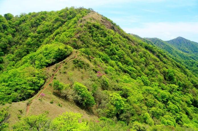 塔ノ岳山容
