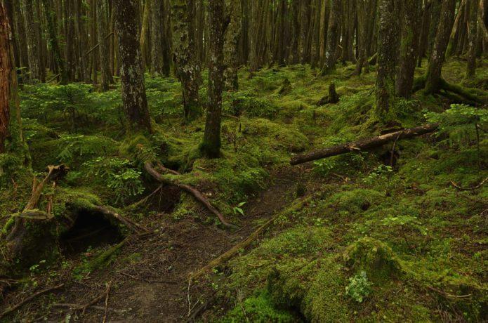 白駒池周辺の苔の森