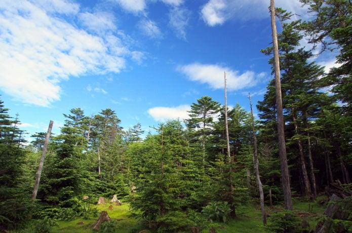 白駒池周辺の高見石の風景画像