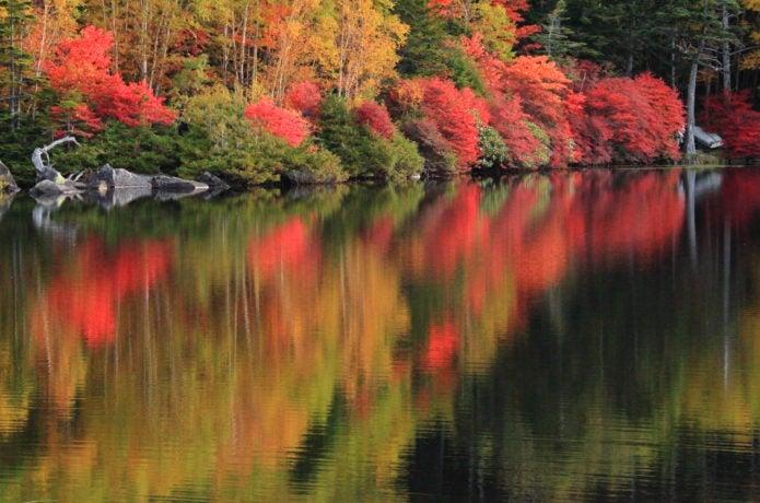 白駒池の紅葉の画像