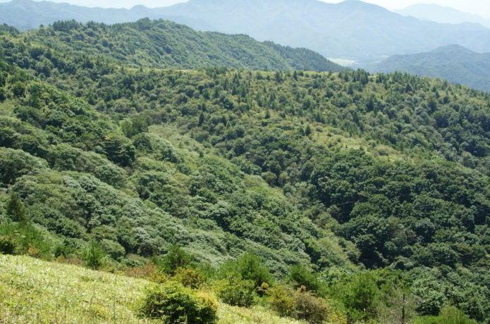 飯盛山の画像