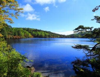 白駒池の画像