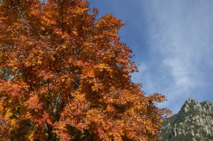 紅葉と瑞牆山の画像