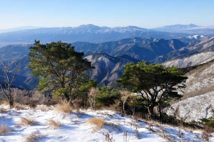 冬の金時山