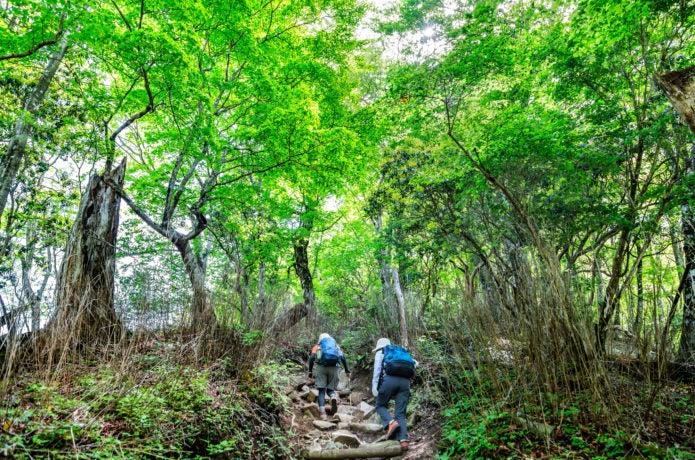 神奈川の山を登る登山者