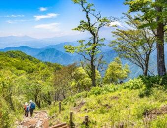 夏の丹沢登山