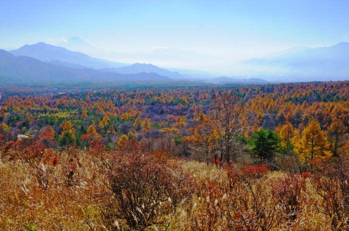美し森から見える景色の画像