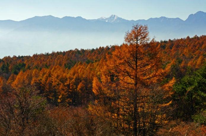 美し森の紅葉画像