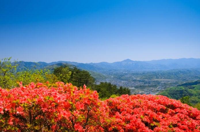 宝登山山頂からの眺め画像