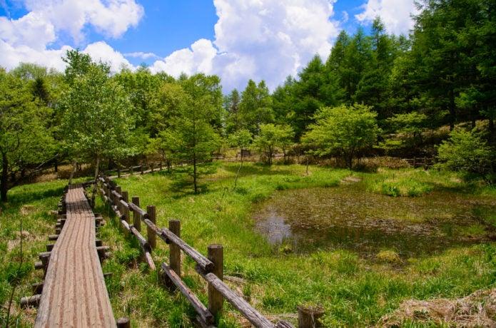 美し森トレッキングコースの画像