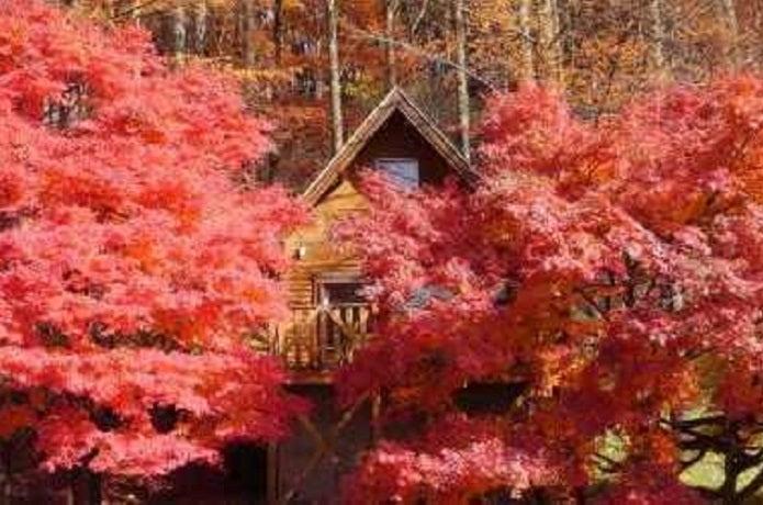 四徳温泉キャンプ場の紅葉