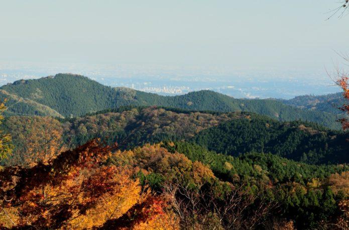 中央線藤野駅から行ける陣馬山の紅葉