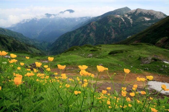 旭岳・清水岳の花