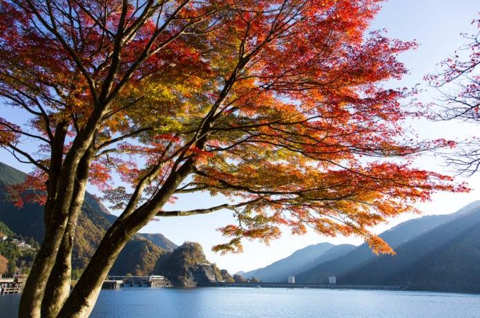奥多摩湖の紅葉