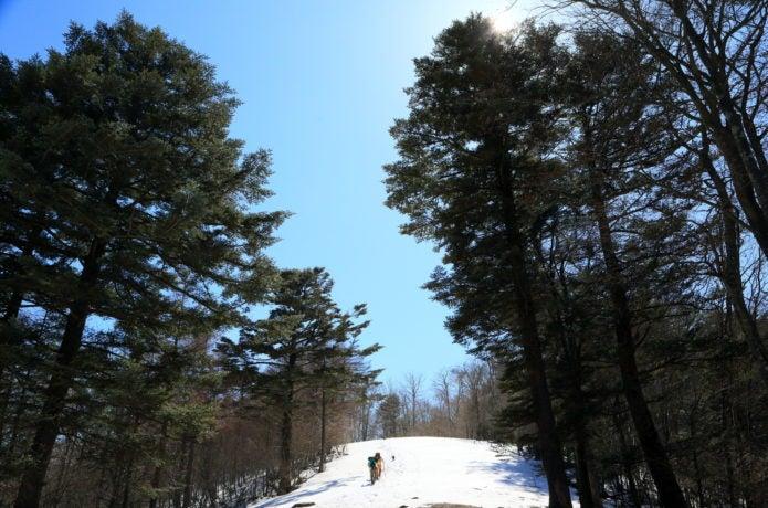 雪の滝子山