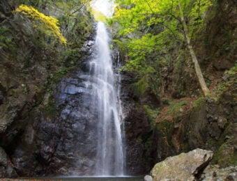 川苔山で見られる百尋ノ滝
