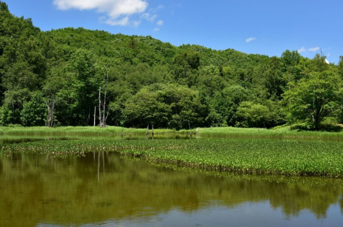 一の瀬園地の画像