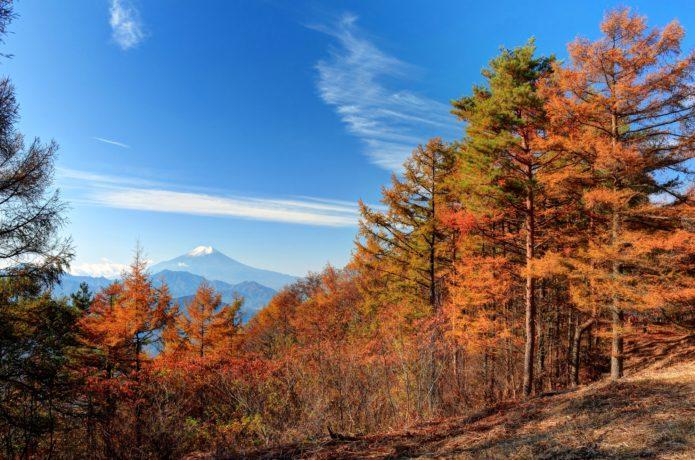 中央線鳥沢駅から行ける扇山の紅葉