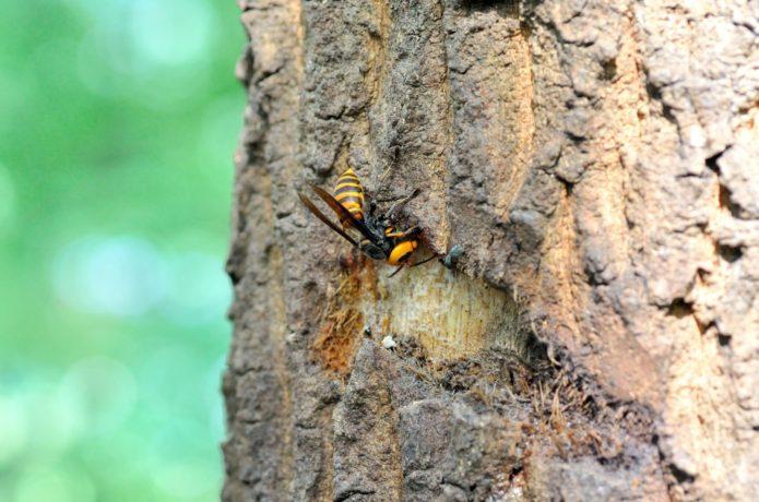 蜂に刺された時に!知らないと怖い応急処置方法【専門家監修】