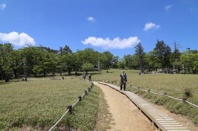 大台ケ原の正木ヶ原の画像