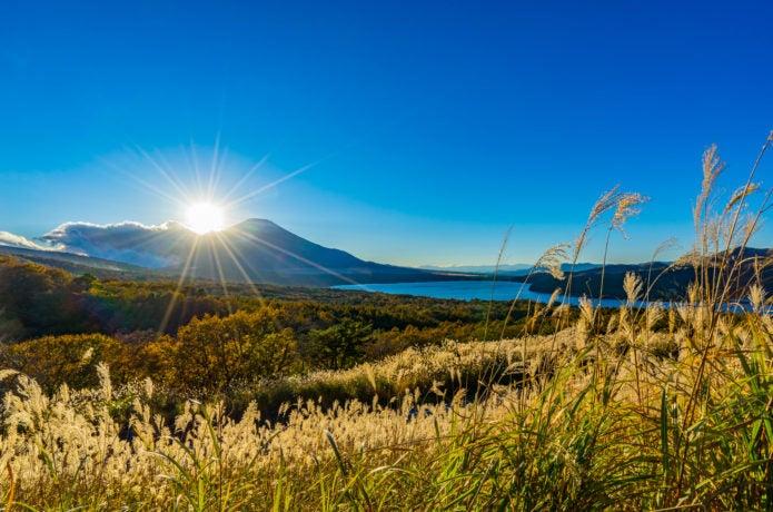 ススキの名所山中湖パノラマ台のススキ