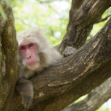 木の上の猿