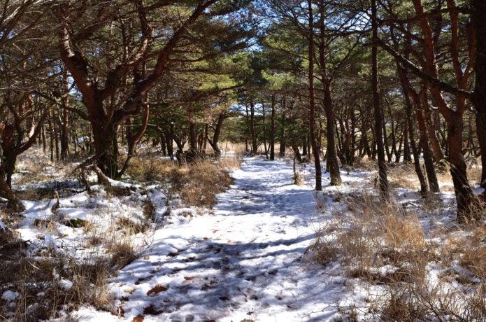 えびの高原の登山道