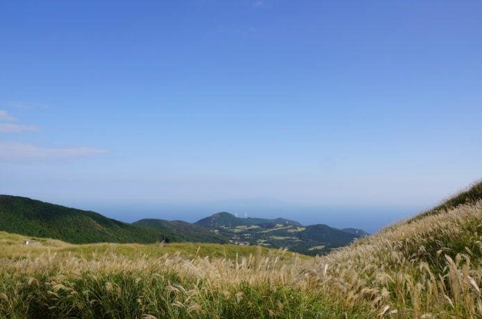 ススキの名所稲取細野高原のススキ