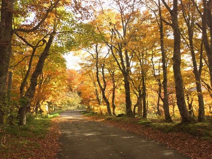蔵王中央高原の紅葉