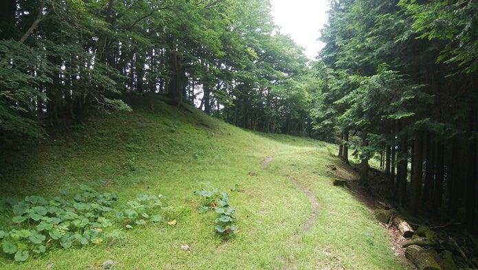 川苔山~日向沢ノ峰へのコース