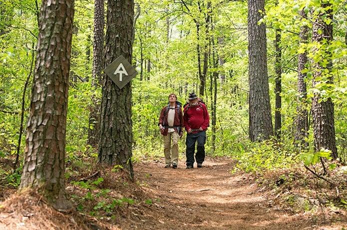 森の中を歩くカッツとビル