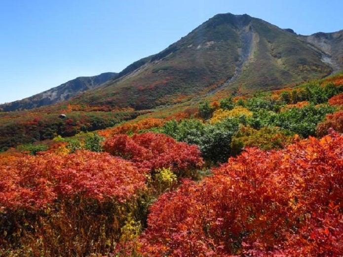 お花松原周辺の紅葉